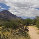 Picture - A trail through Catalina State Park near Tucson.