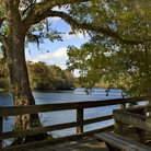 Picture - Boardwalk on the Suwannee River.