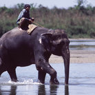Picture - Boy riding an elephant in Chitwan National Park.