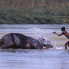 Picture - Elephant bath, Chitwan National Park.