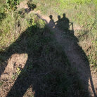 Picture - Shadow of an elephant and riders in Chitwan National Park.