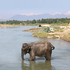 Picture - Elephant in the River, Chitwan National Park.