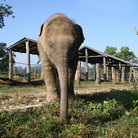 Picture - Baby elephent at a breeding sanctuary at Chitwan National Park.