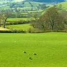 Picture - Green pasture in the Clun Valley.