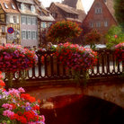 Picture - Flowers on a bridge in Colmar.