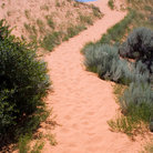 Picture - Walking path through Coral Pink Sand Dunes State Park.