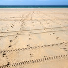 Picture - Footprint and tracks in the sand in Gwithian sands, Cornwall.