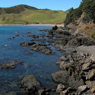 Picture - Coastline of the Coromandel Peninsula.