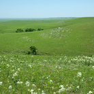 Picture - Green rolling hills of Flint Hills National Prairie.
