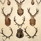 Picture - Animal trophies at the Chateau Cheverny.