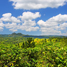 Picture - The view over Croydon Plantation near Montego Bay.