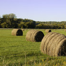 Picture - Bales of hay in a field near Decorah.