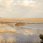 Picture - Marsh at the edge of Delaware Bay.