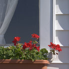 Picture - Window with flowerpot in Delton, Michigan.