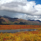 Picture - Park Highway near Denali National Park.