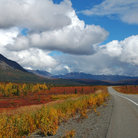 Picture - Fall colors along the Georges Park Highway near Denali National Park.