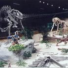 Picture - An exhibit at the Dakota Dinosaur Museum in Dickinson.