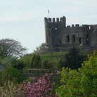 Picture - Flowering trees below Dudley Castle.