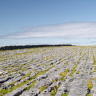 "Picture - ""Limestone pavement"" of Dun Aonghasa, Aran islands."