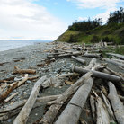 Picture - Driftwood along the shore at Ebey's Landing National Historical Reserve on Whidbey Island.