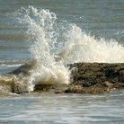 Picture - Wave hits Edisto Beach, South Carolina.