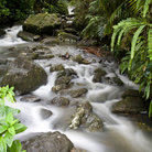 Picture - A stream in El Yunque National Forest.