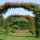 Picture - Rose Garden Archways at Elizabeth Park, Hartford.