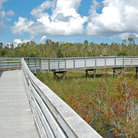 Picture - Boardwalk through the Everglades in Everglades National Park.