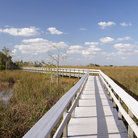 Picture - Boardwalk through the swamps of the Everglades.