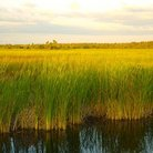 Picture - The river of grass which is the Everglades National Park.