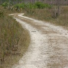 Picture - Dirt road through the Everglades.
