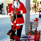 Picture - Man and dog getting into the Christmas spirit in Key West.