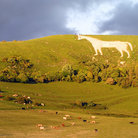 Picture - Prehistoric White Horse on hill near Faringdon.