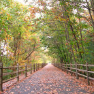 Picture - A walking trail in Farmington, seen in the fall.