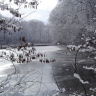 Picture - Winter pond at Fernwood Botanical Garden & Nature Preserve in Niles, MI.