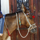 Picture - Donkey at the harbor at Fira.