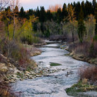 Picture - Autumn in Fish Creek Provincial Park in Calglary.