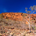 Picture - Coolibahs and Red Cliffs in the Flinders Range.