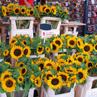 Picture - Sunflowers for sale at the Amsterdam flower market.