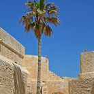 Picture - Palm tree and Fort Qaitbey at Alexandria.