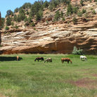 Picture - Horses grazing in a beautiful pasture in Kanab, Utah.