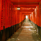 Picture - Orange tunnel in the Inari Shrine in Kyoto.