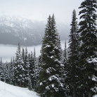 Picture - Snow covered trees in the Garibaldi Valley.