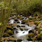 Picture - Roaring Forks Nature trail stream near Gatlingburg.