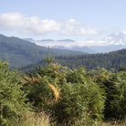 Picture - Mount Rainier seen from Gifford Pinchot National Forest.