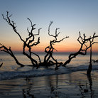 Picture - Driftwood on a beach on Jekyll Island.