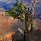 Picture - Moran Point Lookout, Grand Canyon.