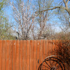 Picture - House fence in Grand Junction.