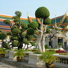 Picture - Sculpted trees in front of Wat Phra Keo next to the Grand Palace in Bangkok.