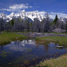 Picture - Beaver pond in front of Grand Teton Range.